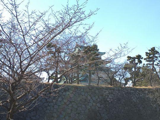 名古屋城桜3.JPG